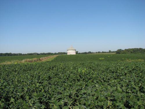 soybean field silo
