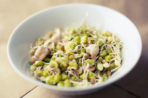soybean sprouts soya