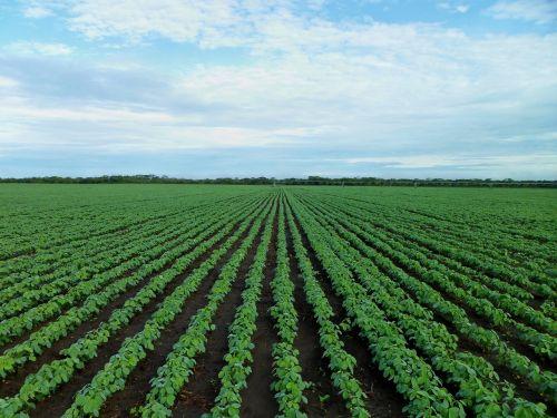 soybean field farming field