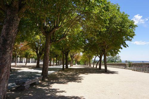 spain trees summer
