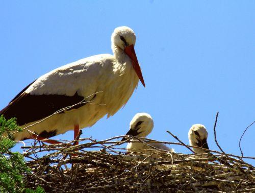 spain storks nest