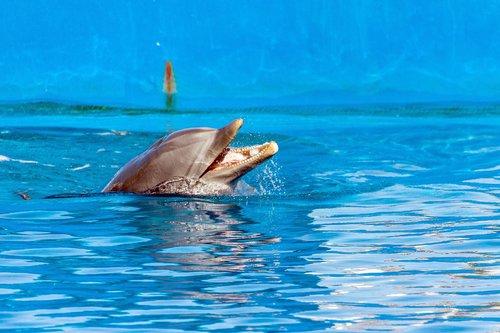 spain  valencia  ozeaneum
