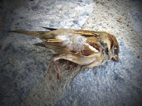 sparrow dead bird metaphor