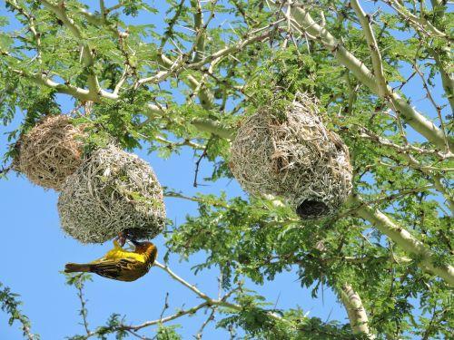 sparrow bird tree
