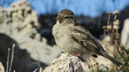 sparrow bird animal