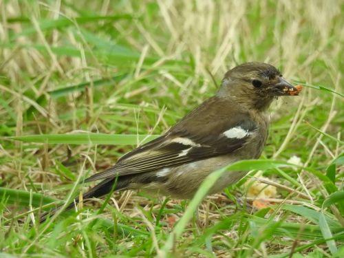 sparrow birds nature