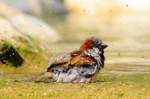 sparrow bird bathroom