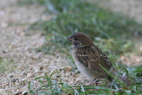 sparrow  new  park