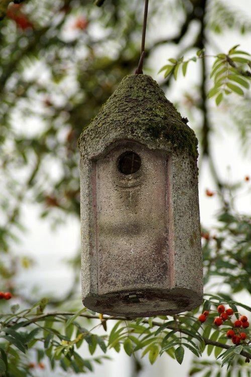 sparrow  bird  bird feeder