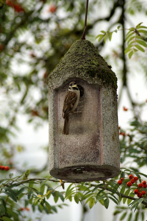 sparrow  bird  bird feeder
