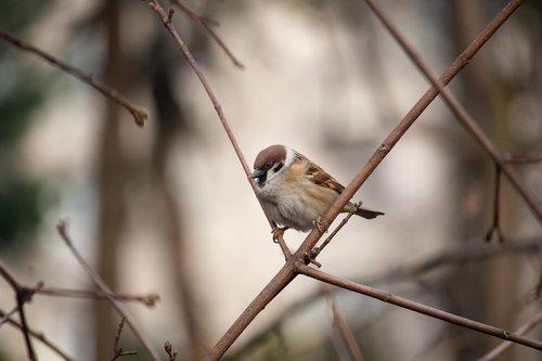 sparrow  bird  nature