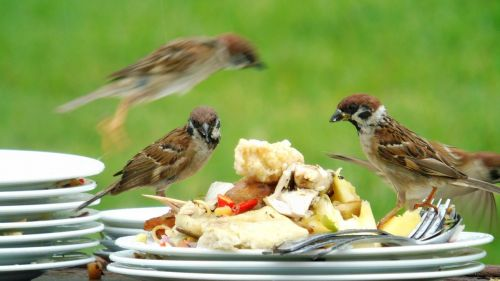 sparrow party crowded