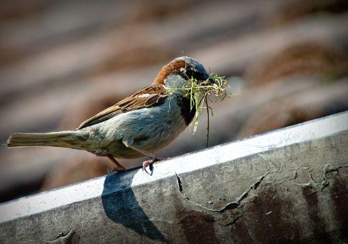 sparrow bird a lone