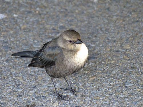 Sparrow With Attitude