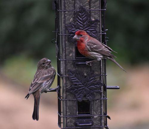 sparrows birds bird feeder