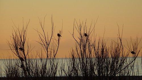 sparrows  branches  birds