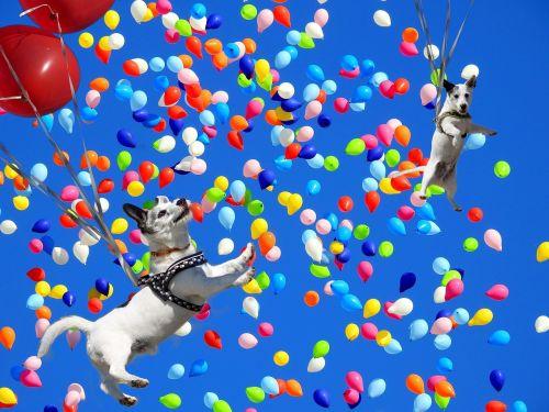 spassfototo dog balloons