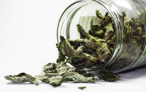 spices mint health