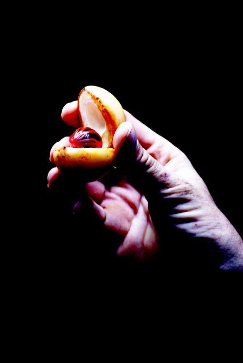 spices nutmeg aphrodisiac