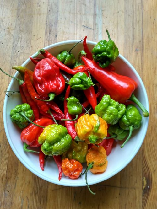 spicy peppers habanero red scorpion