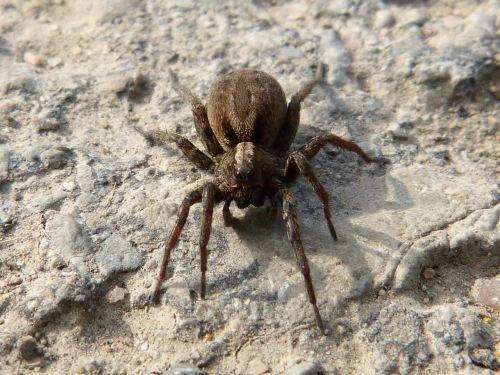 spider arachne predator