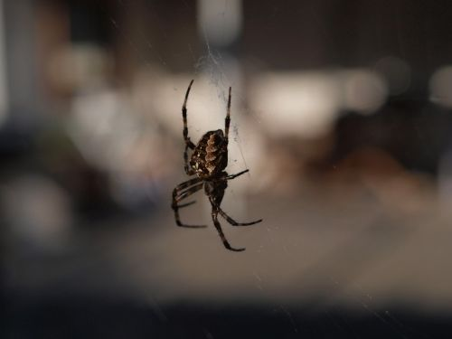 spider nature close