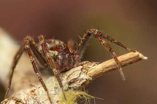 spider insect macro