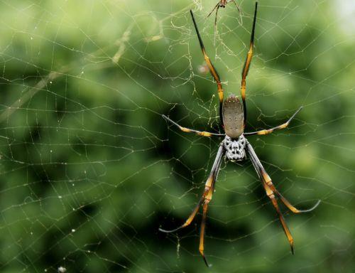 spider trap closeup