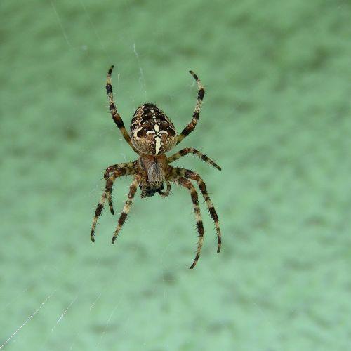 spider spider web macro