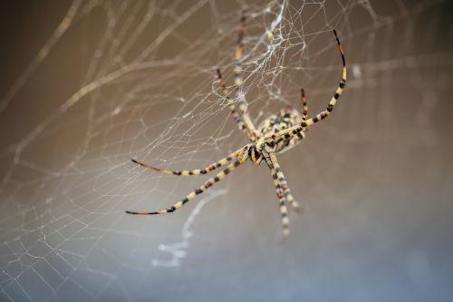 spider strong cobweb