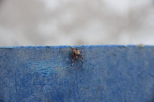 spider arachnids predator