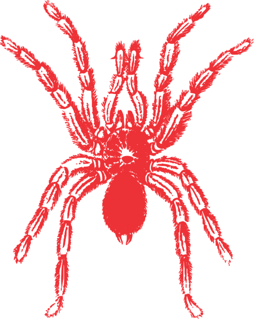 spider vector red