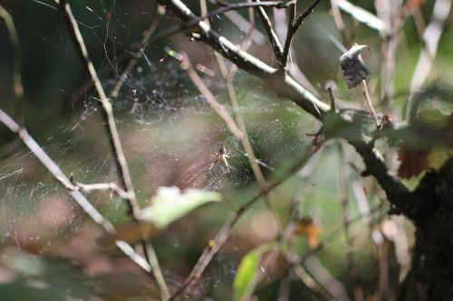 spider cobweb close