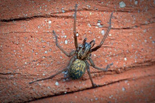 spider house spider wide angle spider