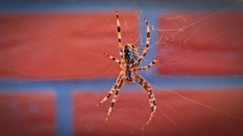 spider insect animal