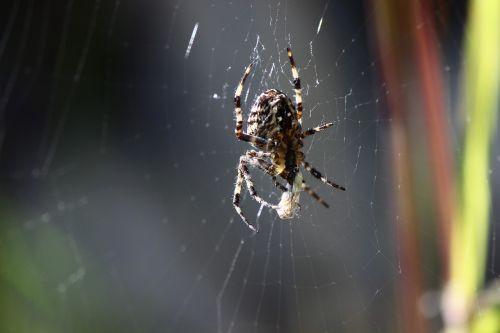 spider macro close