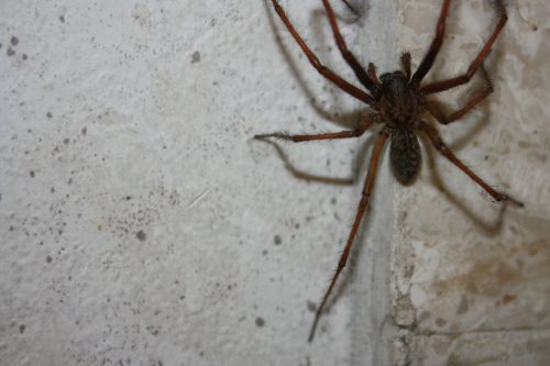 spider insect close