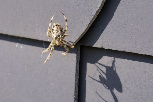 spider insect network