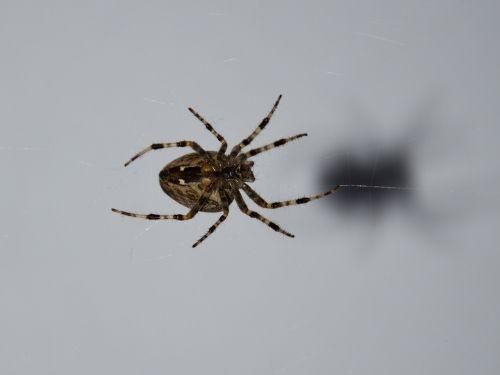 spider nasty crawl