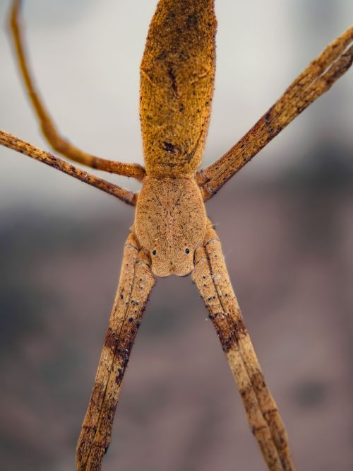 spider stick eyes