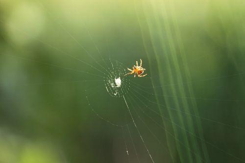 spider cobweb predator prey