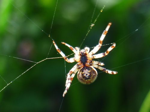 spider spnnentier bottom