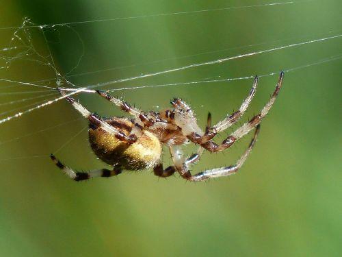 spider arachnid bottom