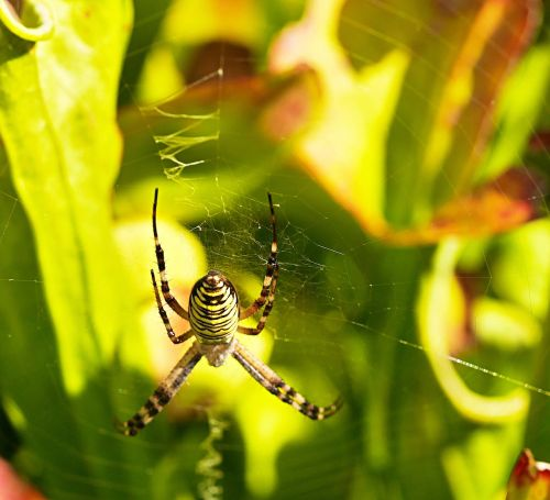 spider cobwebs striped