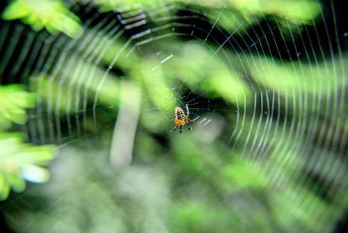 spider on tangled web