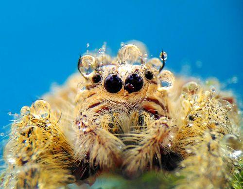 spider macros nature