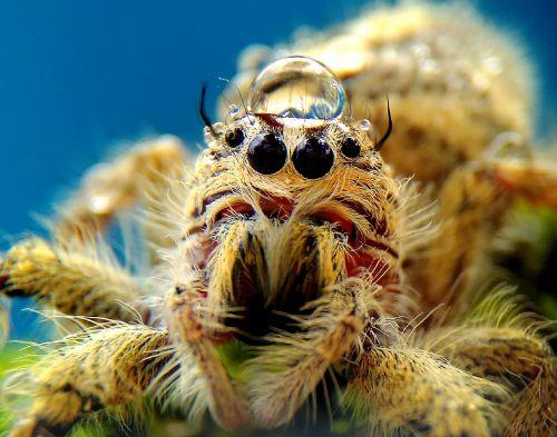 spider animals macros