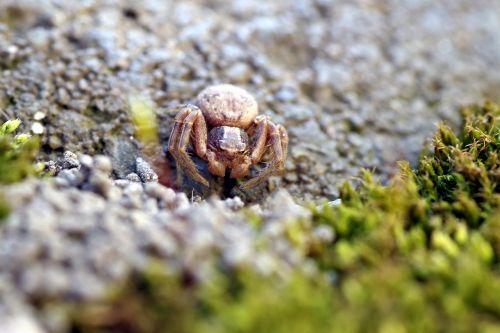 spider small tiny