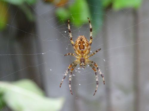 spider garden close-up