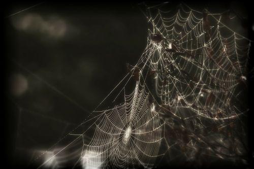 spider web cobweb